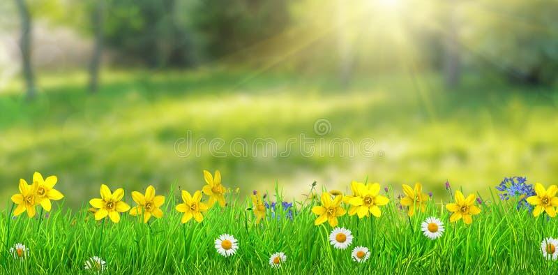 Un prato della foresta della molla di fantasia con i fiori e l'erba fotografie stock