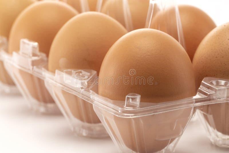 Un primer de huevos en el empaquetado de la transparencia fotografía de archivo libre de regalías