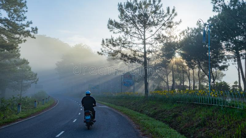 Un primo mattino in un più pineforest a Dalat, il Vietnam fotografia stock libera da diritti