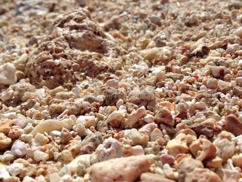 Un primo piano dei grani della sabbia e del corallo fotografia stock