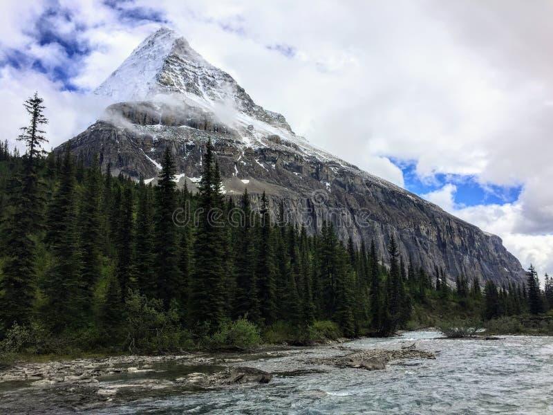 Un primo piano di un fiume frigido rapido e circondato da una foresta scura fotografie stock libere da diritti