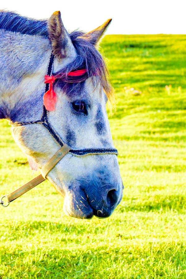 Un primo piano di un cavallo sul pascolo immagine stock