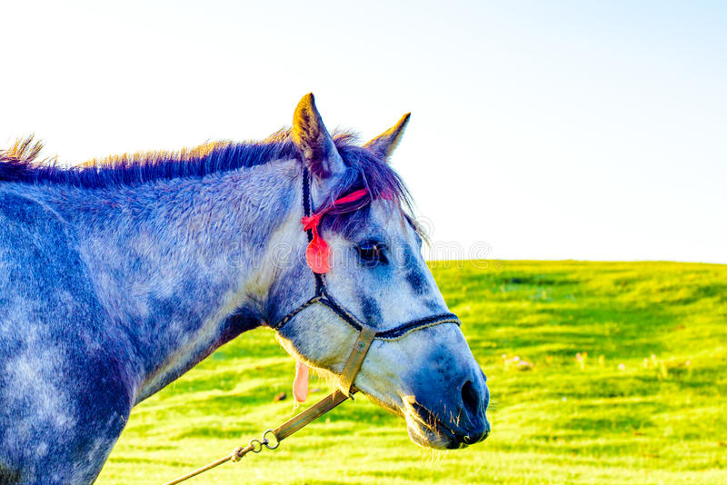 Un primo piano di un cavallo sul pascolo immagini stock