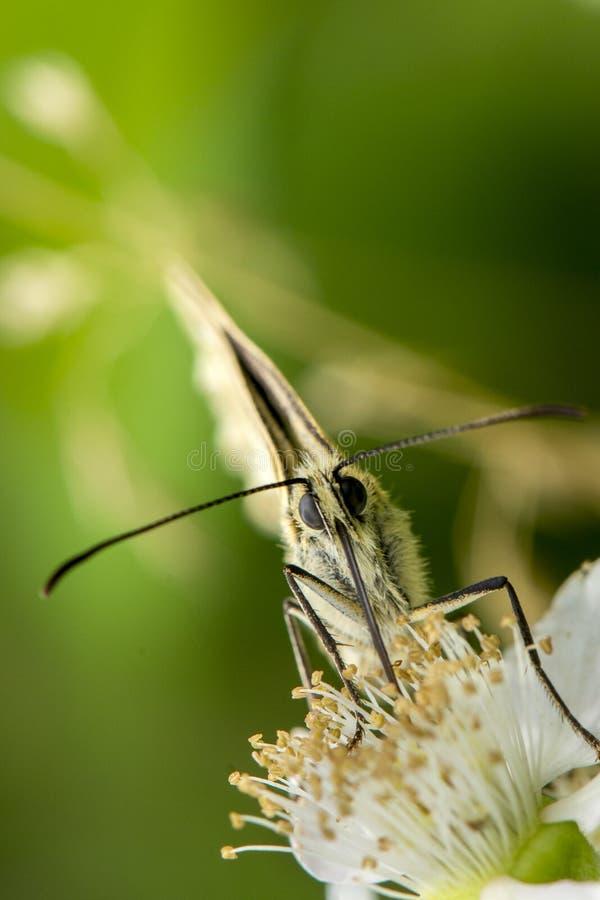 Un primo piano sparato di una farfalla fotografie stock libere da diritti