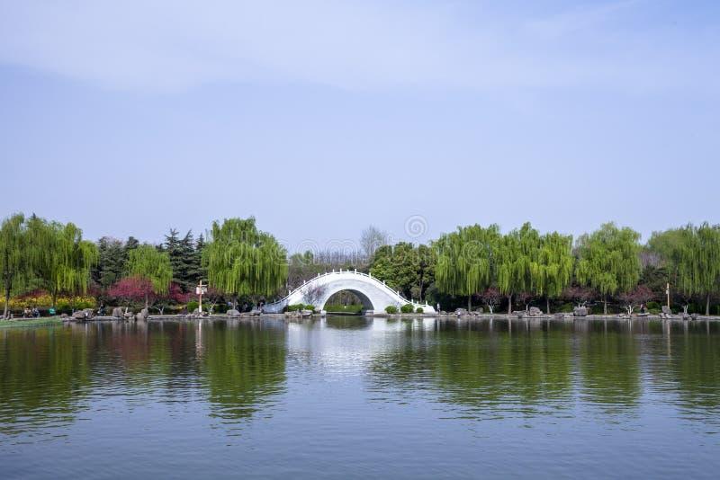 Un puente blanco del arco es especialmente hermoso contra la perspectiva de sauces y de melocotones verdes imagen de archivo libre de regalías