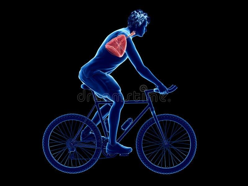 un pulmón de los ciclistas stock de ilustración