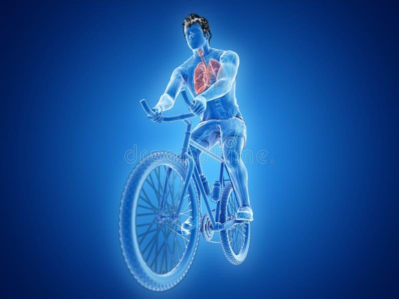 un pulmón de los ciclistas ilustración del vector