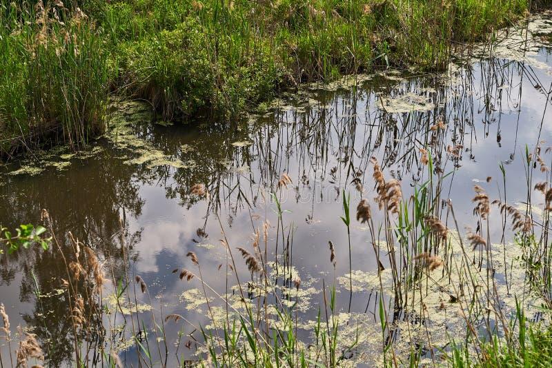 Un río con un banco demasiado grande para su edad con la hierba La reflexi?n en el agua imagenes de archivo