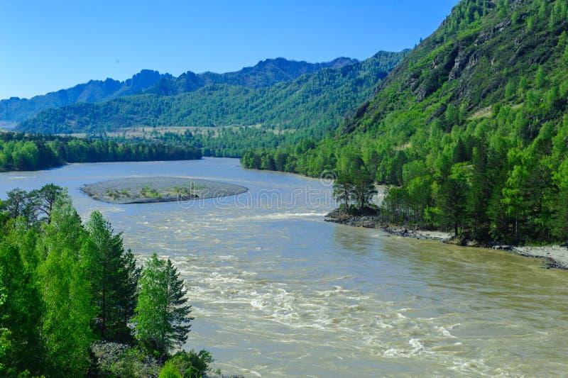 Un río de la montaña que fluye entre los bancos del bosque foto de archivo libre de regalías