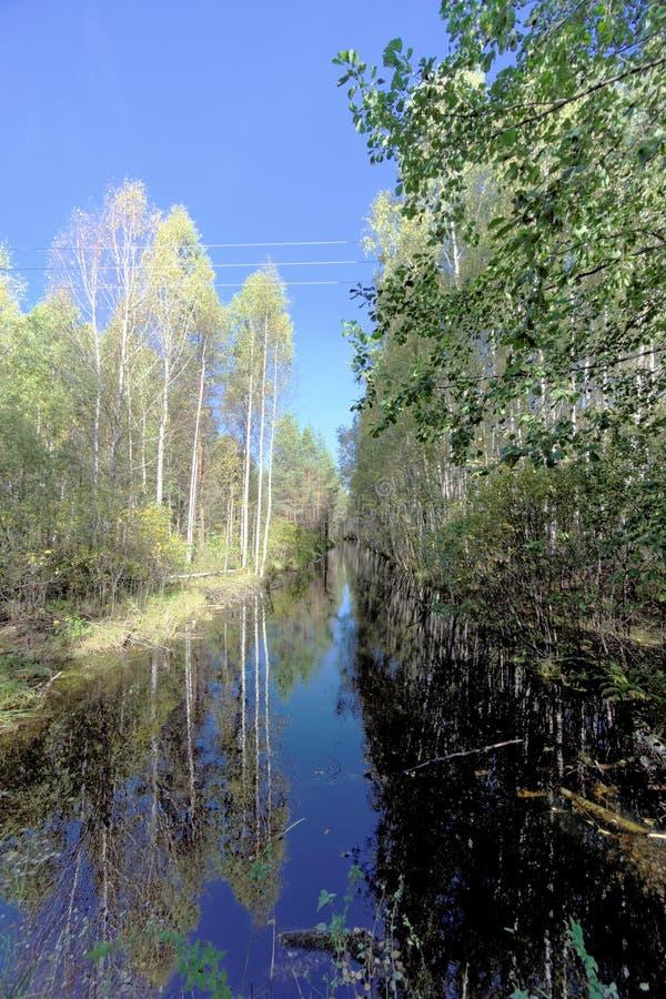 Un río estrecho con una superficie tranquila del agua entre los árboles Reflexión de espejo en el agua oscura del cielo azul y fotografía de archivo