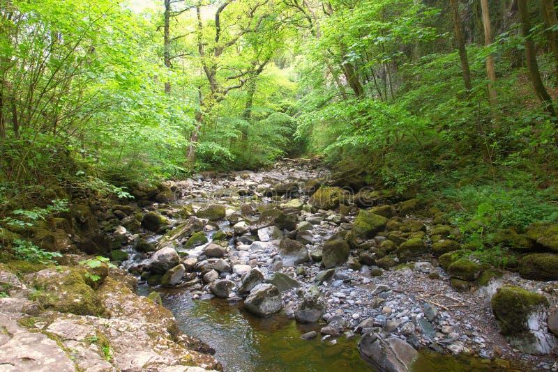 Un río que pasa a través de un valle enselvado en los valles de North Yorkshire foto de archivo