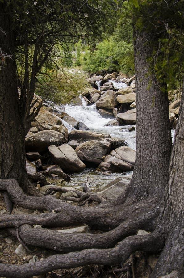 Un río y árboles en las montañas con las raíces encendido encima de la tierra foto de archivo libre de regalías