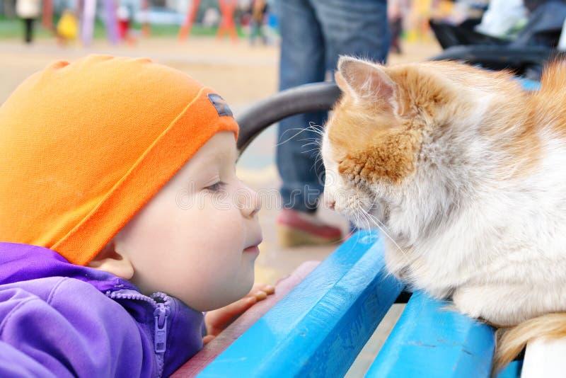 Un ragazzo che esamina un gatto fotografia stock