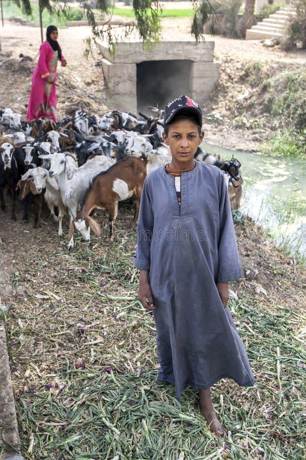 Un ragazzo e una donna egiziani pascono il loro gregge delle capre a Saqqara nell'Egitto fotografia stock libera da diritti