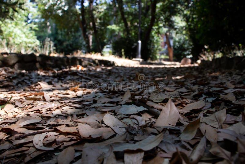 Un raggio del sole colpisce le molte foglie accatastate in una strada privata del parco immagine stock