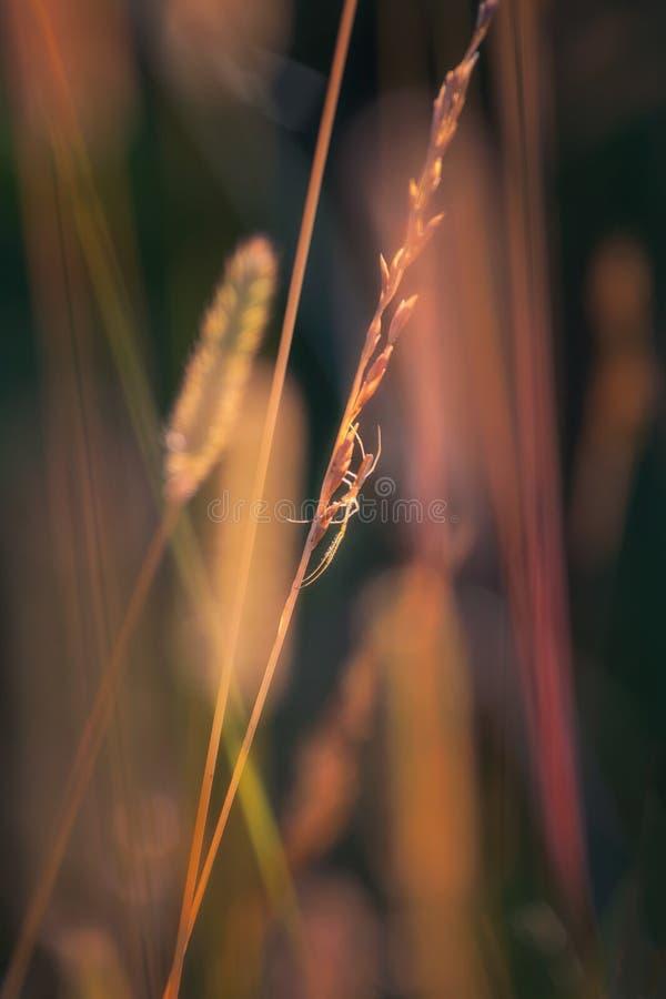 Un ragno backlit al tramonto fotografia stock libera da diritti