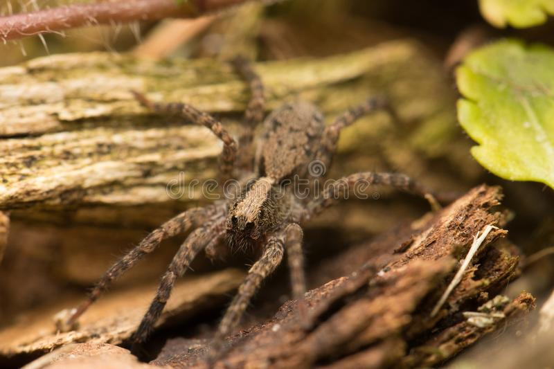 Un ragno in un giardino floreale fotografie stock