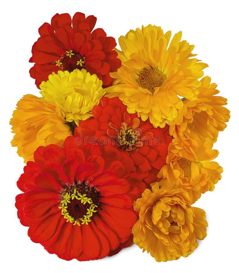 Un ramo de calendula y de zinnias brillantes de las flores imagen de archivo libre de regalías