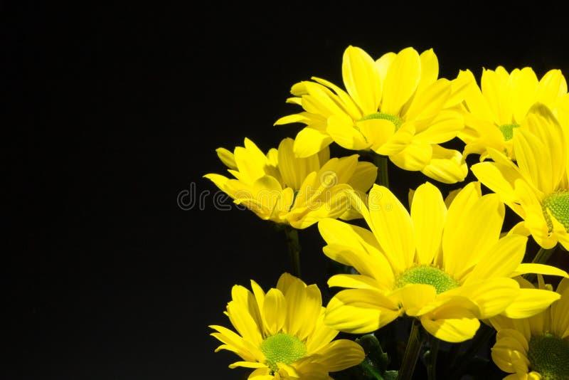 Un ramo de crisantemos amarillos en un fondo negro, espacio para el texto imagenes de archivo