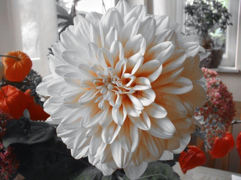 Un ramo de diversas flores le gusta la fruta china anaranjada de la linterna fotos de archivo libres de regalías