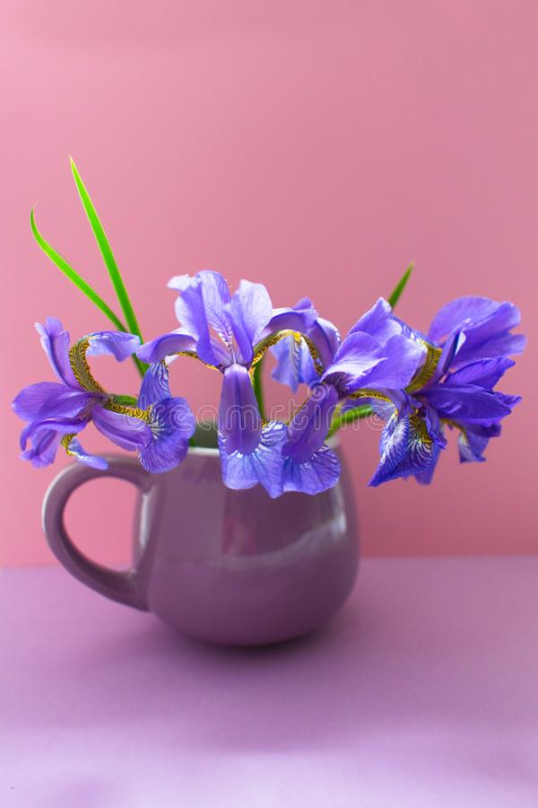 Un ramo de flores azules del iris en una taza de la lila en un fondo rosado apacible fotografía de archivo libre de regalías