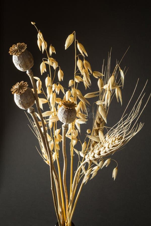 Un ramo de hierbas y de cereales secados Amapola, avena y trigo en un fondo negro imagen de archivo libre de regalías
