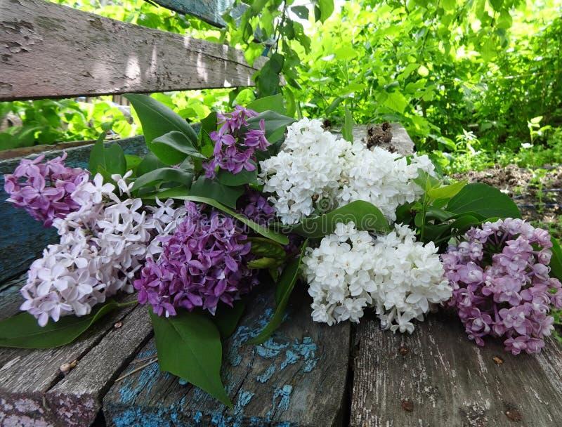 Un ramo de lilas coloridas en un banco de madera viejo imágenes de archivo libres de regalías