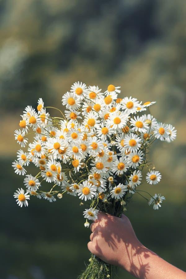 Un ramo de margaritas de los wildflowers da un child& x27; mano de s imagen de archivo