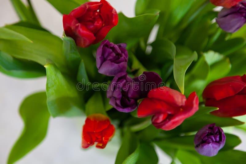 Un ramo de opinión superior del primer de los tulipanes de rojo y de púrpura con las hojas verdes en un fondo blanco foto de archivo libre de regalías