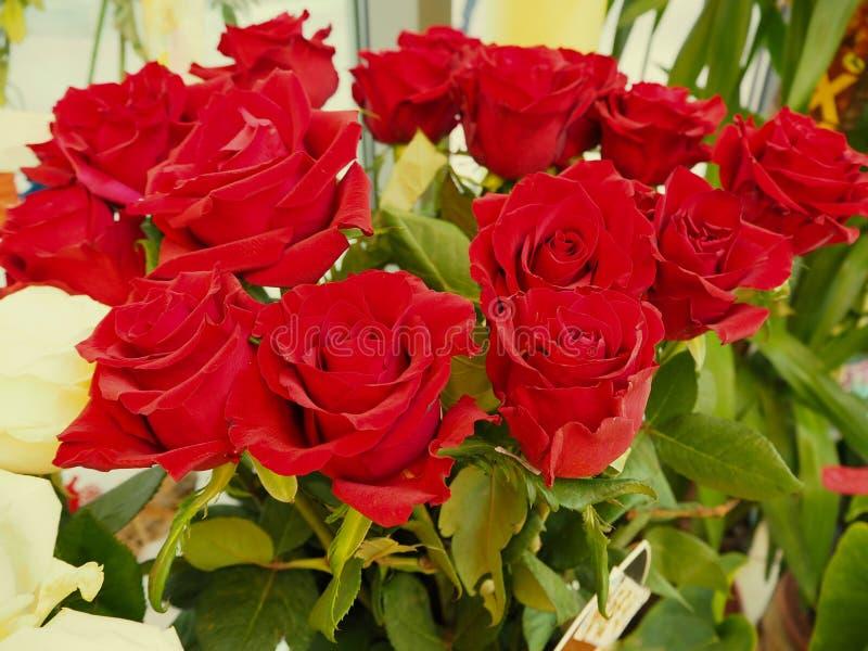 Un ramo de rosas rojas imagen de archivo