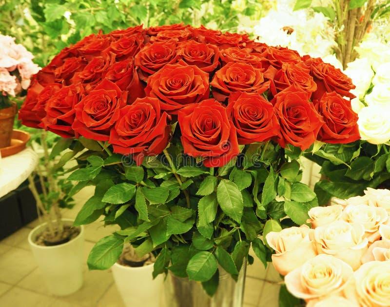 Un ramo de rosas rojas hermosas en el invernadero foto de archivo