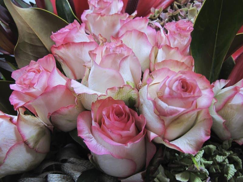Un ramo de rosas rosadas en un manojo imagenes de archivo