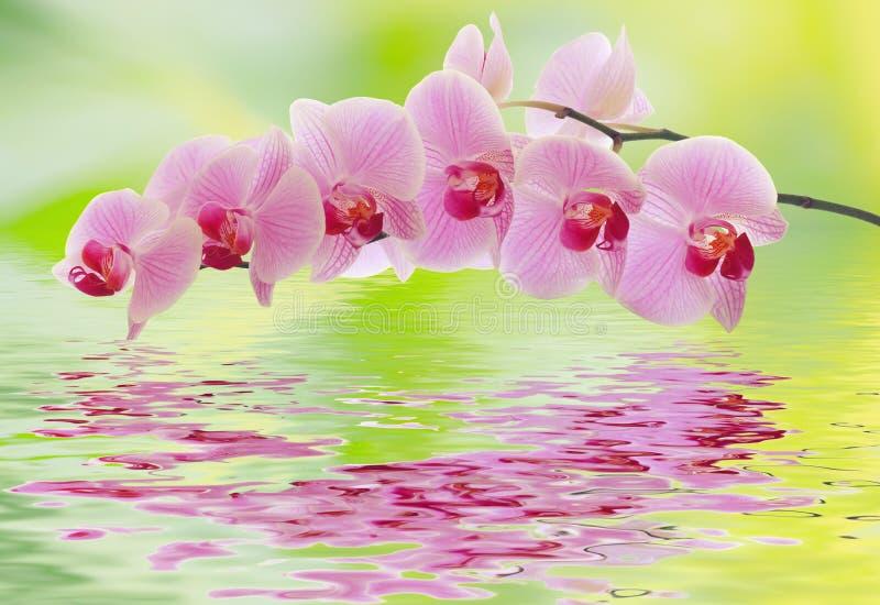 orchidee e acqua