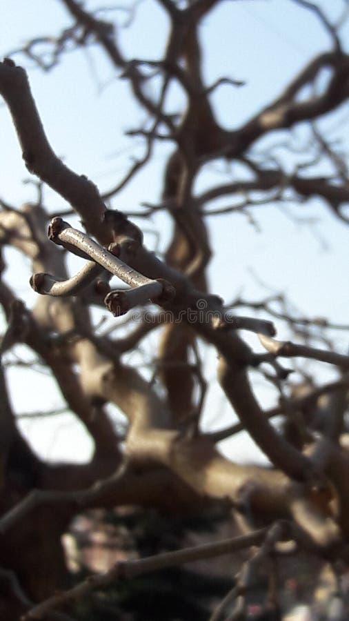 Un ramo di un albero meravigliosamente piegato fotografia stock
