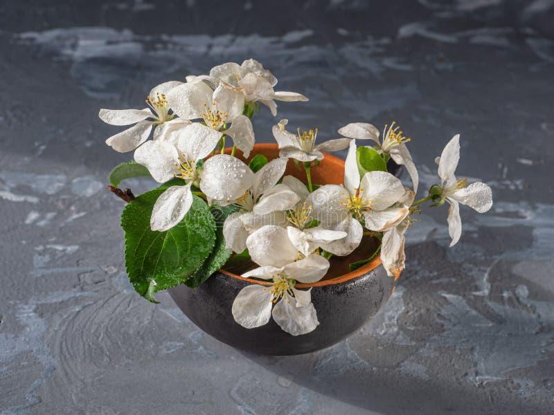 Un ramo di di melo sbocciante in un piccolo vaso ceramico su un fondo grigio, colpo da da vicino immagini stock