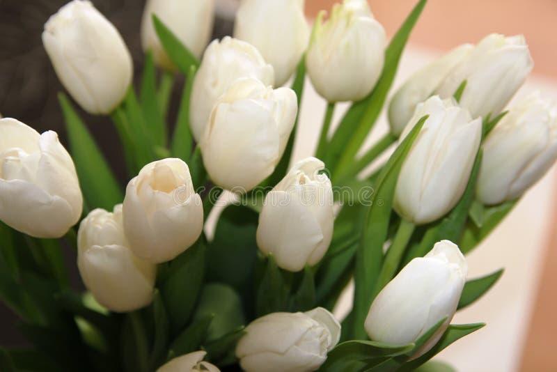 Un ramo grande de tulipanes blancos foto de archivo