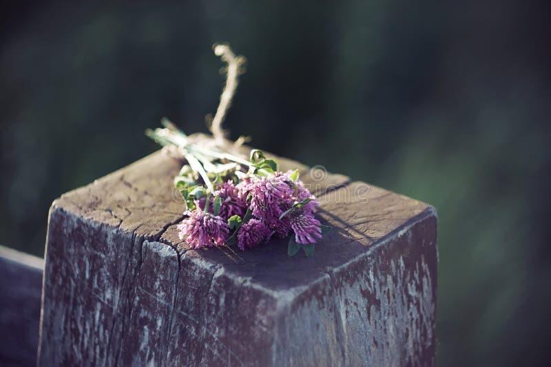Un ramo, recogido de las flores del trébol rosado, miente en un poste fotografía de archivo libre de regalías
