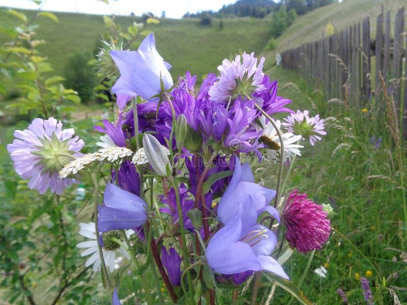 Un ramo simple de flores recogió en la montaña imagen de archivo libre de regalías