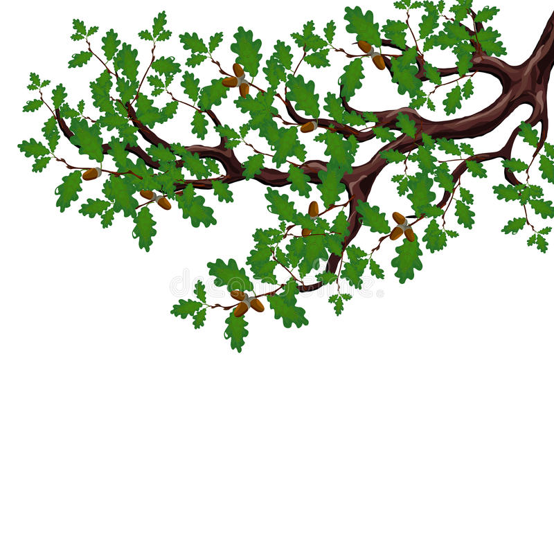 Un ramo verde di grande quercia con le ghiande Disegno volumetrico senza una maglia e una pendenza Isolato su bianco illustrazione vettoriale