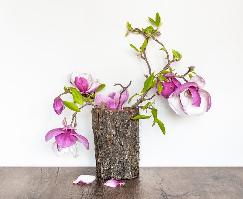 Un ramoscello della magnolia di fioritura nella corteccia di un albero fotografia stock libera da diritti