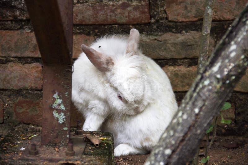 Un rasguño del conejo imagen de archivo