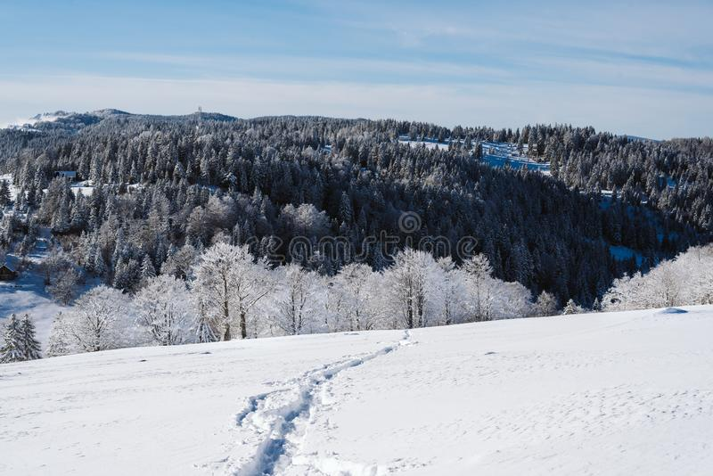 Un rastro en cuesta nevosa en la cima de la montaña con los pinos en el fondo fotografía de archivo libre de regalías