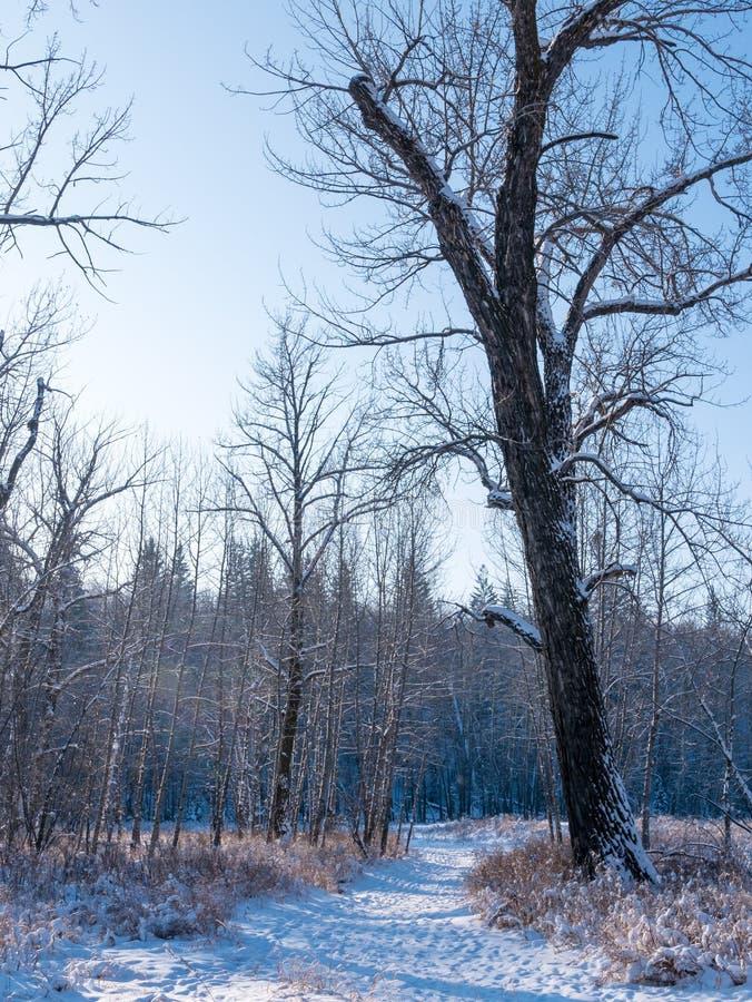 Un rastro en el bosque en un día de invierno frío imagen de archivo