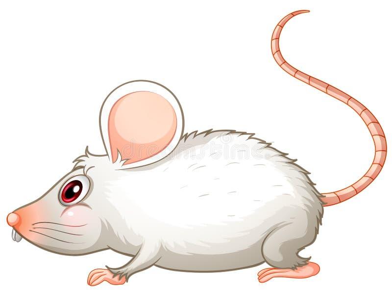Un ratón blanco libre illustration