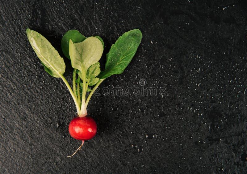 Un ravanello rosso delizioso organico su fondo nero immagini stock libere da diritti