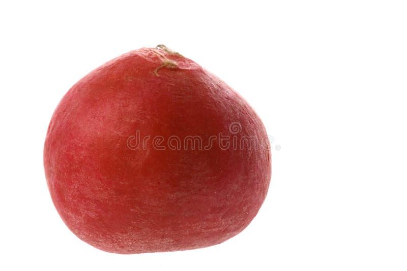 Un ravanello rosso, su bianco immagine stock