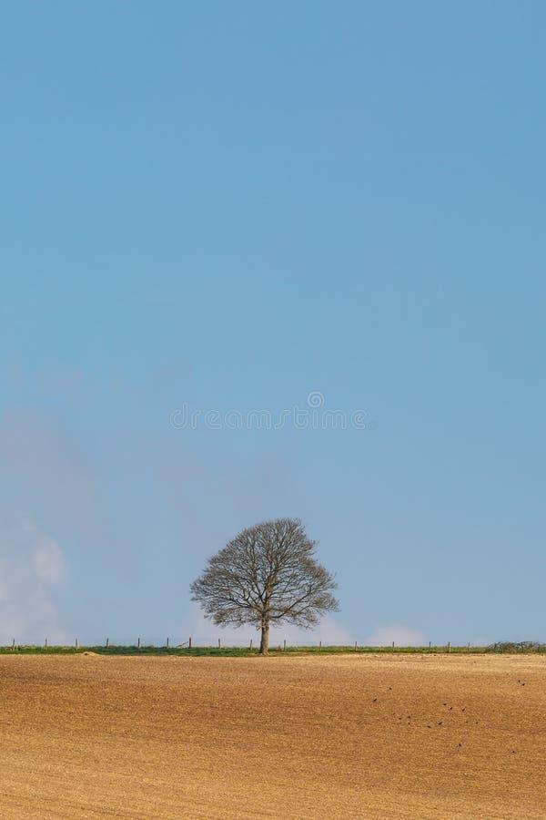 Un ?rbol solitario imagen de archivo libre de regalías