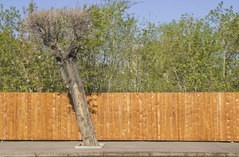 Un recinto di legno pulito fotografia stock