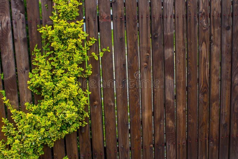 Un recinto di legno tessuto con le fruste Fondo nave fotografia stock