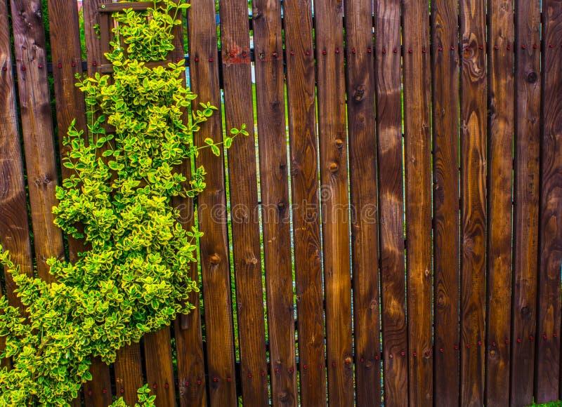 Un recinto di legno tessuto con le fruste Fondo nave fotografia stock libera da diritti